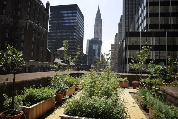 Urban Garden in NYC